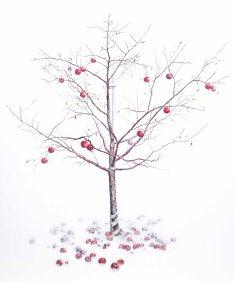 Haraldson Apple Tree SOLD