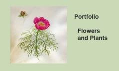 Portfolio - FLOWERS