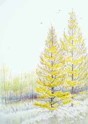 """Tamarack Trees 20""""x28"""""""
