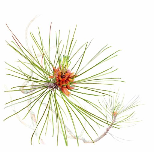 Red Pine Branch SOLD