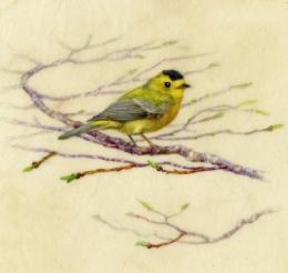 """Wilsons Warbler 7""""x 6"""" Watercolor on Vellum"""