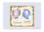 _Cowbird-Catbird--WP-