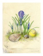 Crocus-&-Shells-WP-