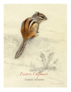Eastern-Chipmunk-WP-