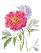 Garden-Variety-WP-
