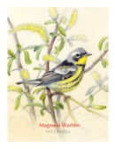Magnolia-Warbler-WP-