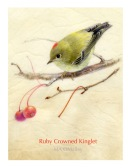 Ruby-Crowned-Kniglet-WP-