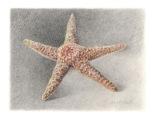 Starfish-WB-
