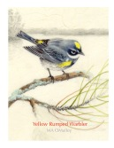Yellow-Rumped-Warbler-WP