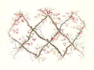 Grapevines_flat_crop_8x6