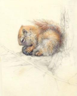 A Squirrel website