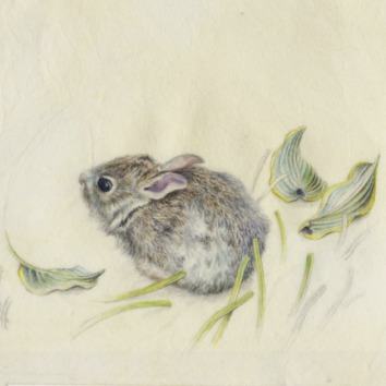 Bunny With Hosta-Watercolor on Vellum