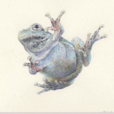Grey Tree Frog-Watercolor on Vellum