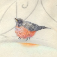 Winter Robin-Watercolor on Vellum