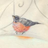 Winter Robin-Watercolor on Vellum