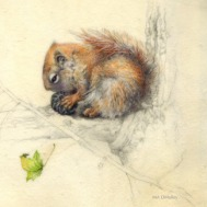 Red Squirrel-WAtercolor on vellum