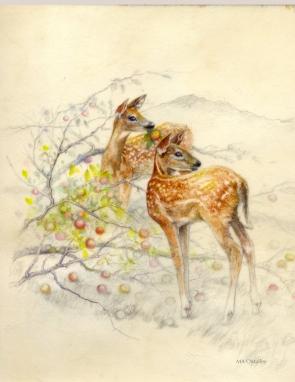 Windfall-Watercolor on Vellum